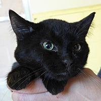 Adopt A Pet :: Enrico - Angola, IN