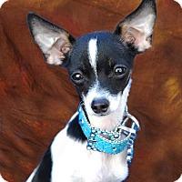 Adopt A Pet :: Bartolo formerly Fievel - Las Vegas, NV