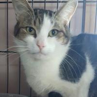 Adopt A Pet :: Tigger - Simcoe, ON