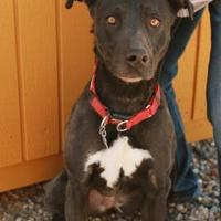 Adopt A Pet :: Korda - Rio Rancho, NM