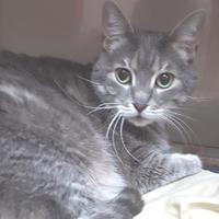 Adopt A Pet :: Desmond - Miami, FL