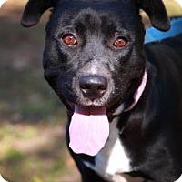 Adopt A Pet :: Princess Texie - Austin, TX