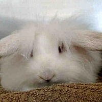 Adopt A Pet :: BLOSSOM - San Clemente, CA