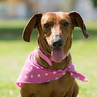 Adopt A Pet :: Molly - La Jolla, CA