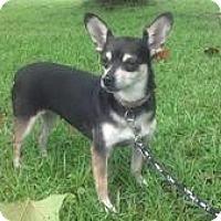 Adopt A Pet :: Missy - Crawfordville, FL