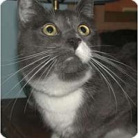 Adopt A Pet :: Mr. O'Malley - Portland, OR