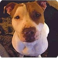 Adopt A Pet :: Kobe - Flint (Serving North and East TX), TX