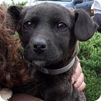 Adopt A Pet :: Buddy - Athens, GA