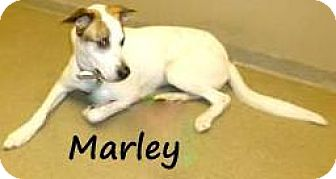 Terrier (Unknown Type, Medium) Mix Dog for adoption in Palm Coast, Florida - MARLEY