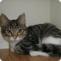 Adopt A Pet :: Symphony - Milwaukee, WI