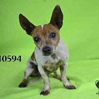 Adopt A Pet :: VINSON - STOCKTON, CA