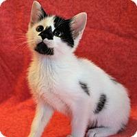 Adopt A Pet :: Bonny - Greensboro, NC