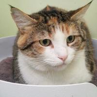 Adopt A Pet :: Karen - Norfolk, VA