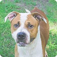 Adopt A Pet :: CHUCKIE - Tavares, FL