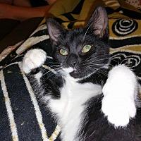 Adopt A Pet :: Gadget - Tuckerton, NJ