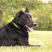 Adopt A Pet :: Bogie - Nashua, NH