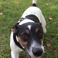 Adopt A Pet :: Jerry - Gainesville, FL