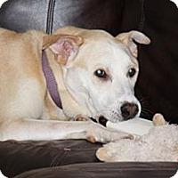 Adopt A Pet :: Duncan - Arden, NC