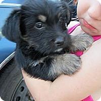 Adopt A Pet :: Gila-ADOPTED!! - Glastonbury, CT