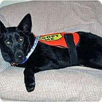 Adopt A Pet :: Wilbur - in Flagstaff - Scottsdale, AZ