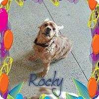 Adopt A Pet :: Rocky - Lawrenceville, GA