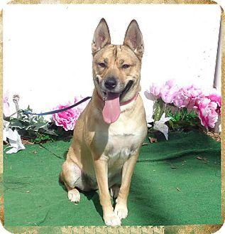 German Shepherd Dog Mix Dog for adoption in Marietta, Georgia - NALAH