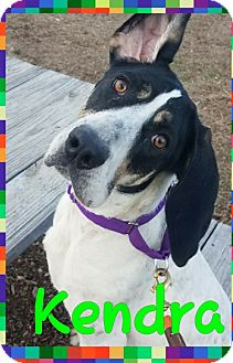 Hound (Unknown Type) Mix Dog for adoption in Breinigsville, Pennsylvania - Kendra