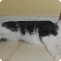 Adopt A Pet :: Makayla - Chattanooga, TN