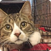 Adopt A Pet :: Woody - East Brunswick, NJ