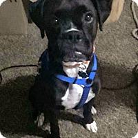 Adopt A Pet :: RUCA - Boise, ID