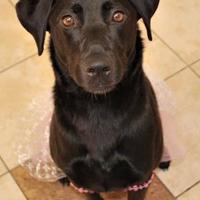 Adopt A Pet :: Lucy - Aberdeen, SD