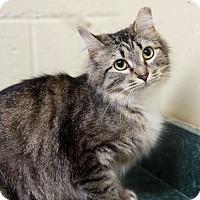 Adopt A Pet :: Gillian - Marietta, GA