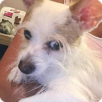 Adopt A Pet :: Draco - Brattleboro, VT