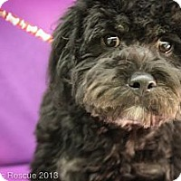 Adopt A Pet :: Tucker - Broomfield, CO