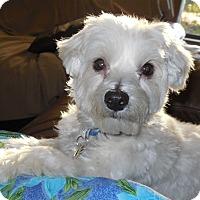 Adopt A Pet :: Frosty - Cotati, CA