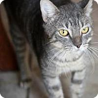 Adopt A Pet :: Maxwell - San Antonio, TX