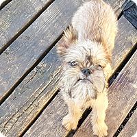 Adopt A Pet :: Grant - Antioch, IL
