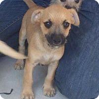 Adopt A Pet :: Charlie Brown - San Diego, CA