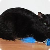 Adopt A Pet :: Pudge - Prescott, AZ