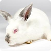 Adopt A Pet :: Loki - Kingston, ON