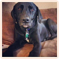 Adopt A Pet :: Tyson - Towson, MD