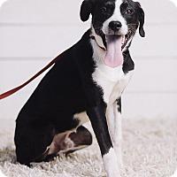 Adopt A Pet :: Bernie - Portland, OR