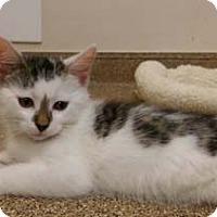 Adopt A Pet :: Mitz - Merrifield, VA