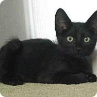 Adopt A Pet :: *TODD - Norco, CA