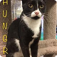 Adopt A Pet :: Hungry - El Dorado Hills, CA