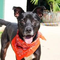Adopt A Pet :: Gatsby - Anderson, IN