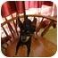 Photo 2 - Miniature Pinscher Dog for adoption in Nichols Hills, Oklahoma - Ricky