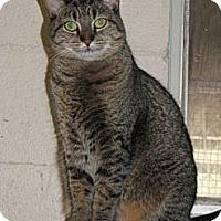 Adopt A Pet :: Tabitha - McDonough, GA