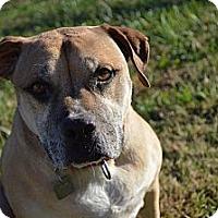 Adopt A Pet :: Gabby - Owasso, OK