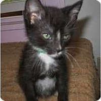 Adopt A Pet :: Rafael - Shelton, WA